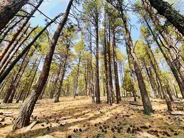 Lot 15 Knollwood Way, Angel Fire, NM 87710 (MLS #105805) :: Page Sullivan Group