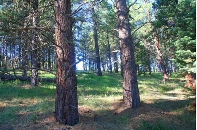 Lot 1311 Brazos, Angel Fire, NM 87710 (MLS #106061) :: Page Sullivan Group