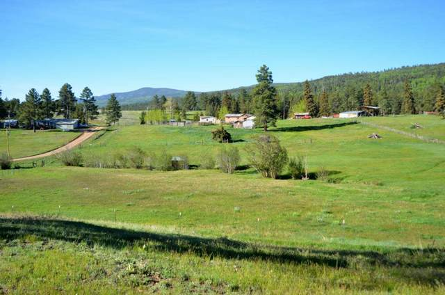Tract B San Antonio Church Road, Black Lake, NM 87710 (MLS #106066) :: Chisum Realty Group