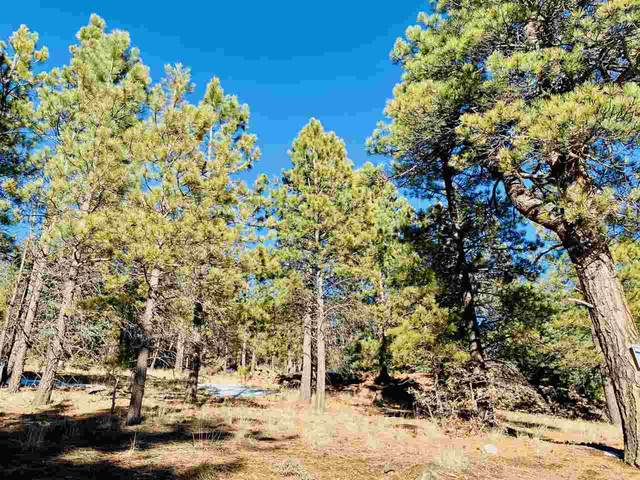 Lot 6 Upper Road, Black Lake, NM 87710 (MLS #106177) :: Chisum Realty Group
