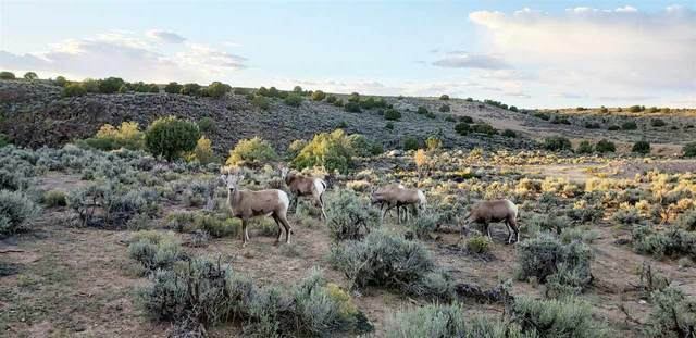 Tract B2 North Of Airport, El Prado, NM 87529 (MLS #106259) :: Chisum Realty Group