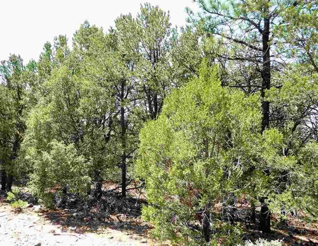 Lower Pinabete Road, Questa, NM 87556 (MLS #106290) :: Chisum Realty Group