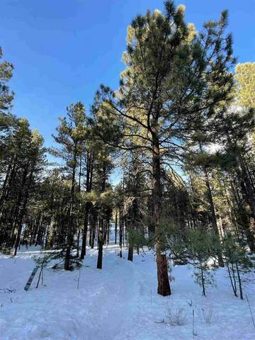 Site 864 Conchas Dr, Angel Fire, NM 87710 (MLS #106336) :: Page Sullivan Group