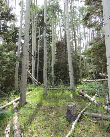 TBD Brazos Dr Lot 141, Angel Fire, NM 87710 (MLS #106442) :: Page Sullivan Group