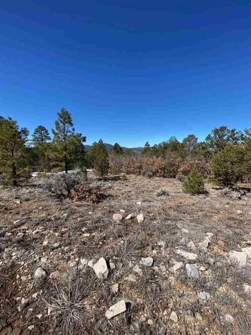 00 Off Echo Forest Road, Questa, NM 87556 (MLS #106584) :: Chisum Realty Group