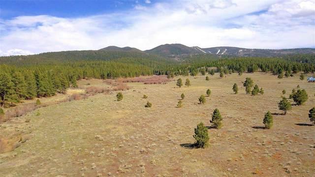 Lot 21 Buckskin Road, Angel Fire, NM 87710 (MLS #106865) :: Coldwell Banker Mountain Properties