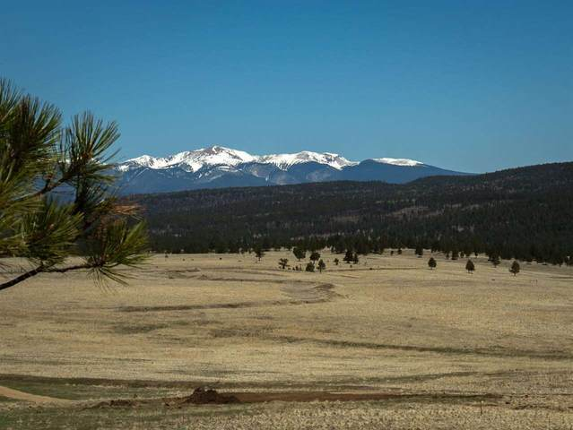 Shields Area 40 Acres, Black Lake, NM 87722 (MLS #106907) :: Angel Fire Real Estate & Land Co.