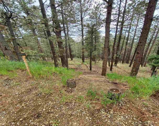 Lot 104 Back Basin, Angel Fire, NM 87710 (MLS #107268) :: Angel Fire Real Estate & Land Co.