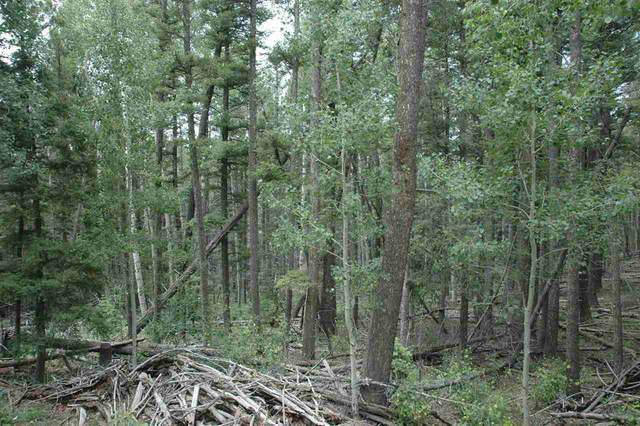 lot 15 Back Basin Road, Angel Fire, NM 87710 (MLS #107387) :: Berkshire Hathaway Home Services