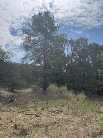 Off Echo Forest Rd, Questa, NM 87556 (MLS #107391) :: Chisum Realty Group