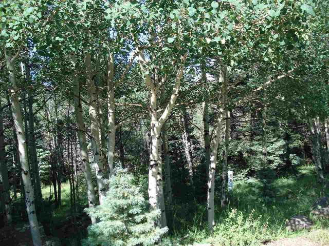 Lot 1157 Panorama Way, Angel Fire, NM 87710 (MLS #107445) :: Angel Fire Real Estate & Land Co.