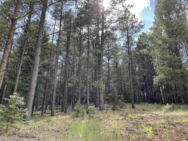 Lot 53 S Valle Grande Trail, Angel Fire, NM 87710 (MLS #107470) :: Angel Fire Real Estate & Land Co.