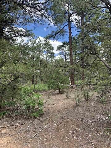 00 North Lama Canyon Road, Lama, NM 87556 (MLS #107499) :: Chisum Realty Group