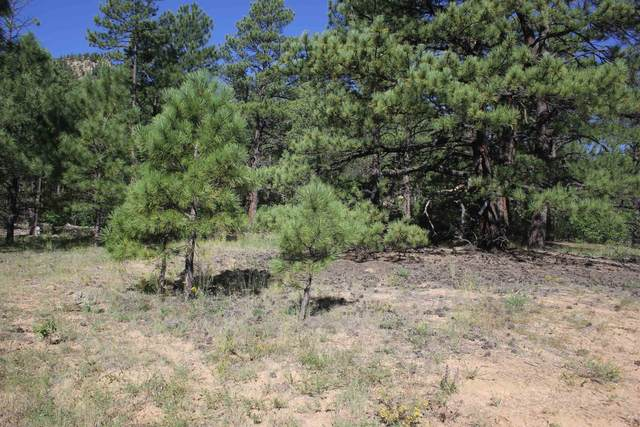 Lot 2 Christmas Tree Canyon, Mora, NM 87732 (MLS #107621) :: Chisum Realty Group