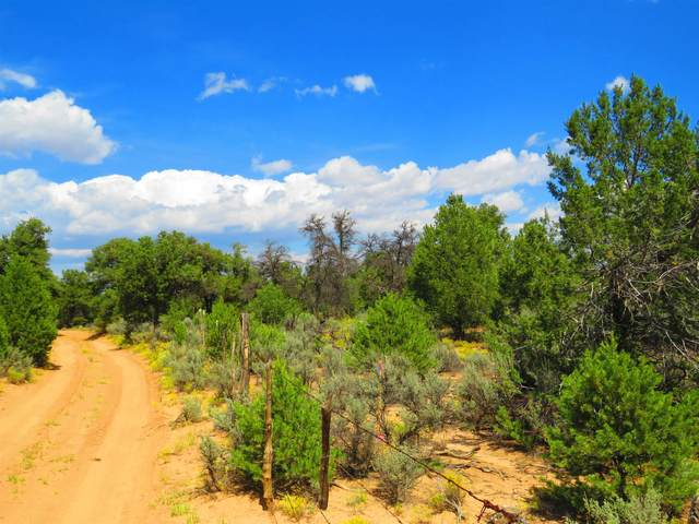 USFS Forest Road 556, Carson, NM 87517 (MLS #107693) :: Angel Fire Real Estate & Land Co.