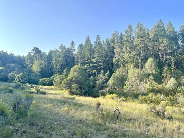 Upper Ojitos, Chamisal, NM 87521 (MLS #107699) :: Page Sullivan Group