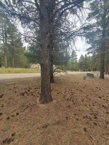 Lot 1230 Quivera Rd, Angel Fire, NM 87710 (MLS #107817) :: Chisum Realty Group