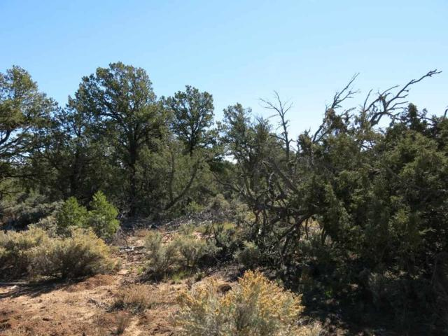 50 Servilleta Lot 50, Tres Piedras, NM 87577 (MLS #94415) :: Page Sullivan Group | Coldwell Banker Lota Realty