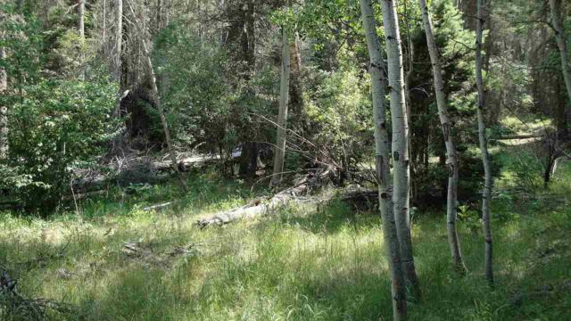 Oriole Drive, Eagle Nest, NM 87718 (MLS #101851) :: The Chisum Realty Group