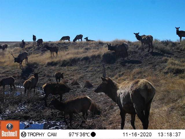17 Miles N Old Us 85, Wagon Mound, NM 87752 (MLS #105871) :: Chisum Realty Group