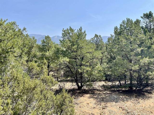 Lot 14 Deer Mesa, Valdez, NM 87580 (MLS #107074) :: Page Sullivan Group