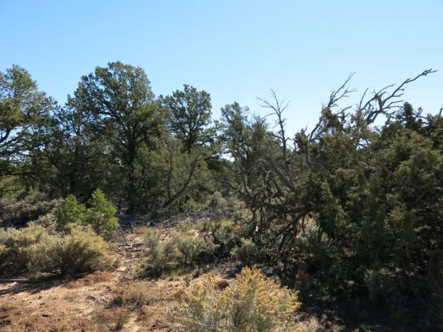 50 Servilleta Lot 50, Tres Piedras, NM 87577 (MLS #94415) :: The Chisum Realty Group