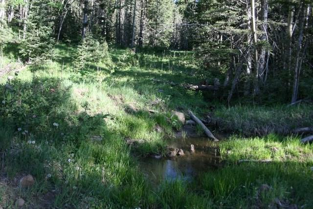 TBD Lot 95, Angel Fire, NM 87710 (MLS #100091) :: Page Sullivan Group | Coldwell Banker Lota Realty