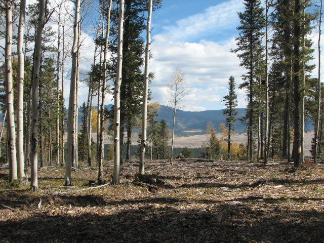 Lot 48 Palo Flechado Ridge Rd, Angel Fire, NM 87710 (MLS #101664) :: Page Sullivan Group | Coldwell Banker Lota Realty