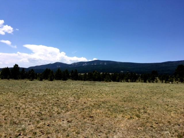 Lot 2 County Road B-1, Black Lake, NM 87710 (MLS #101912) :: The Chisum Realty Group