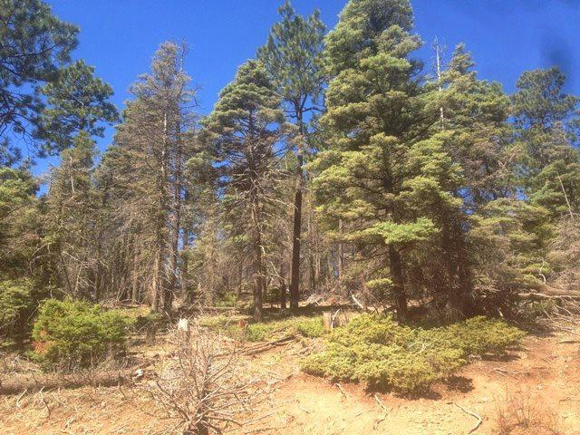 353 Vail Loop, Angel Fire, NM 87710 (MLS #101928) :: Angel Fire Real Estate & Land Co.