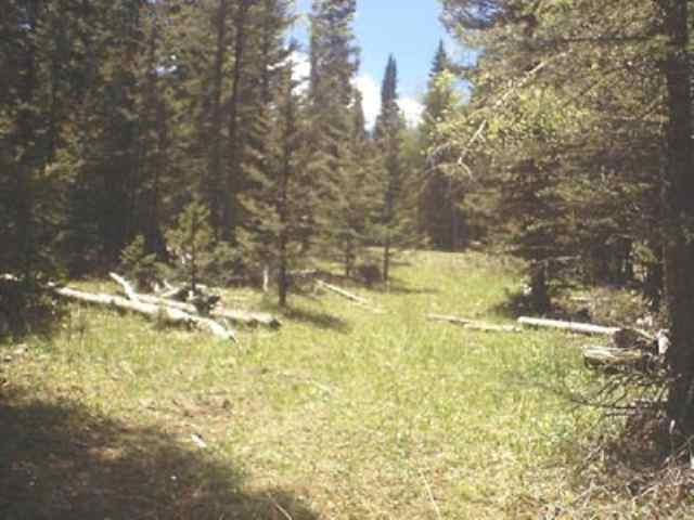 Lot 77 Shields Avenue, Angel Fire, NM 87710 (MLS #102132) :: Page Sullivan Group | Coldwell Banker Lota Realty