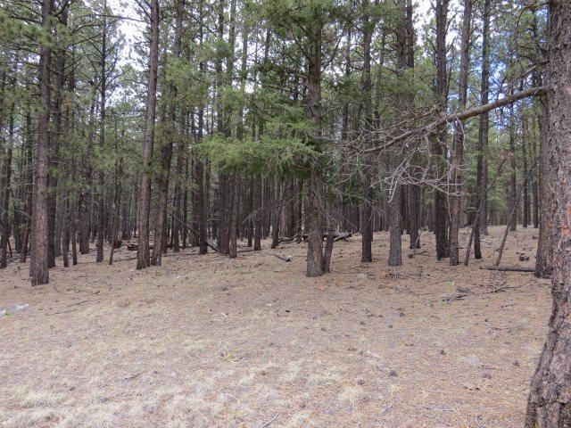 Lot 121 San Juan Drive, Angel Fire, NM 87710 (MLS #103071) :: Page Sullivan Group | Coldwell Banker Mountain Properties