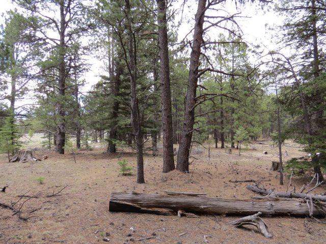 Lot 38 Valle Grande Trail South, Angel Fire, NM 87710 (MLS #103072) :: Page Sullivan Group | Coldwell Banker Mountain Properties