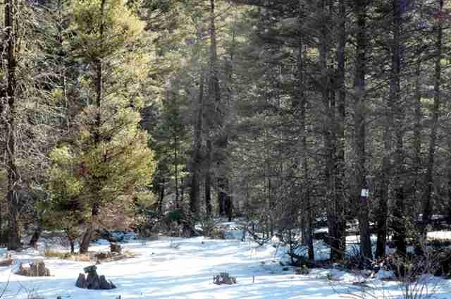Lot 276 Vail Loop, Angel Fire, NM 87710 (MLS #103213) :: The Chisum Realty Group