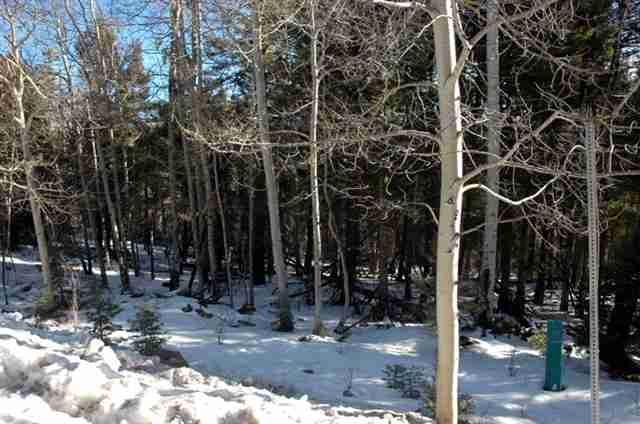 44 Back Basin Rd, Angel Fire, NM 87710 (MLS #103214) :: Angel Fire Real Estate & Land Co.