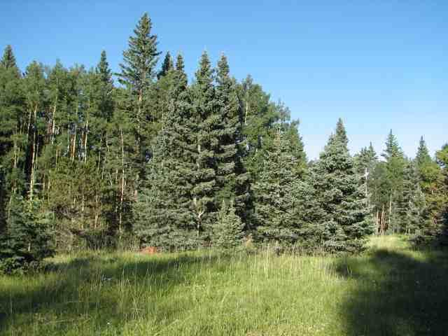 Lot 98 Pleasant Meadow Drive, Angel  Fire, NM 87710 (MLS #103434) :: Page Sullivan Group | Coldwell Banker Mountain Properties