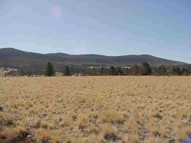 40 Acres Off Hwy 120, Angel Fire, NM 87710 (MLS #104608) :: Angel Fire Real Estate & Land Co.