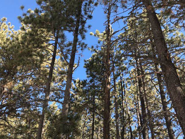 Lot 11 Monte Verde One 1 3B, Angel Fire, NM 87710 (MLS #104660) :: The Chisum Realty Group
