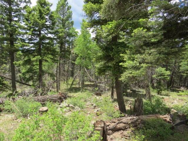 Lot 1156 Panorama Way, Angel Fire, NM 87710 (MLS #105168) :: Page Sullivan Group