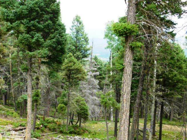 46 Sacramento Drive, Angel Fire, NM 87710 (MLS #105392) :: Angel Fire Real Estate & Land Co.