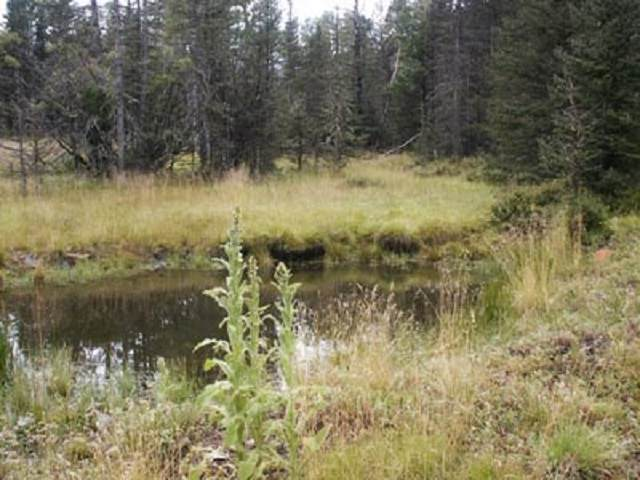 Lot 21 Pleasant Meadow Drive, Angel Fire, NM 87710 (MLS #105557) :: Chisum Realty Group