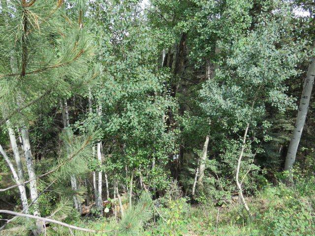 TBD Sierra Blanca Trail Lot 5, Angel Fire, NM 87710 (MLS #106030) :: Page Sullivan Group