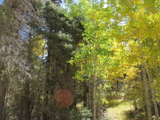 TBD Sierra Blanca Trail Lot 8, Angel Fire, NM 87710 (MLS #106070) :: Page Sullivan Group