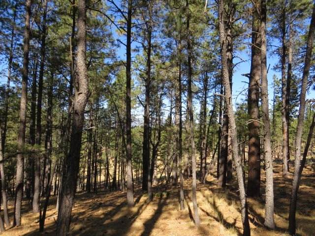 TBD Alta Place Lot 111, Angel Fire, NM 87710 (MLS #106071) :: Page Sullivan Group