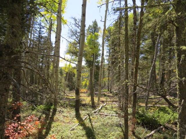 TBD Sierra Blanca Trail Lot 22, Angel Fire, NM 87710 (MLS #106105) :: Page Sullivan Group