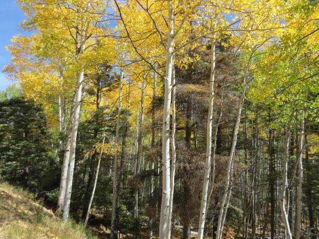 TBD Sierra Blanca Trail Lot 6, Angel Fire, NM 87710 (MLS #106106) :: Page Sullivan Group