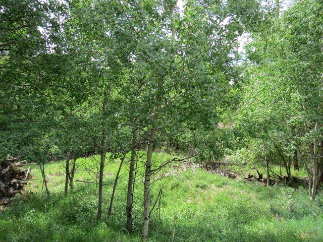 TBD El Camino Real Lot 202, Angel Fire, NM 87710 (MLS #106817) :: Page Sullivan Group