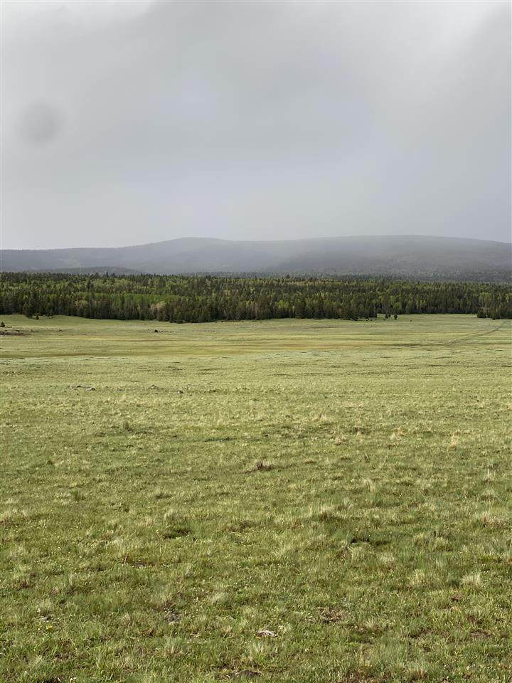 30 acres Off Of Hwy 120 - Photo 1