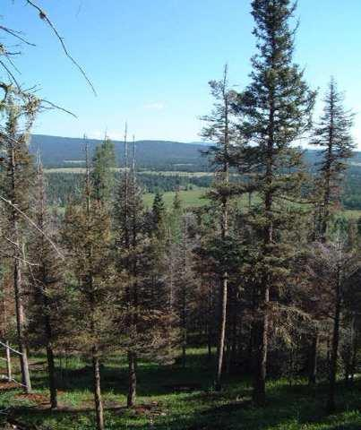 Lot 19 Elk Ridge Subdivision, Angel Fire, NM 87710 (MLS #85333) :: The Chisum Realty Group