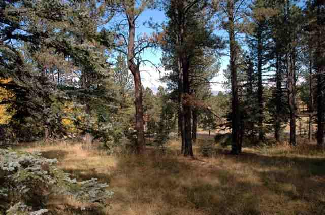 0001 Lakeview Park Way, Angel Fire, NM 87710 (MLS #89761) :: Angel Fire Real Estate & Land Co.